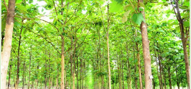 သစ်တောပြုစုထိန်းသိမ်းရေး ဘာကြောင့် အရေးကြီးသလဲ