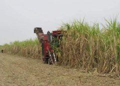 ကြံစိုက်ပျိုးမှုသမိုင်းမှာ စံချိန်တင်အမြင့်ဆုံးဈေးအဖြစ် ကြံ(၁)တန်ကို ကျပ် ၆သောင်းကျော် တောင်သူတွေရရှိလာ